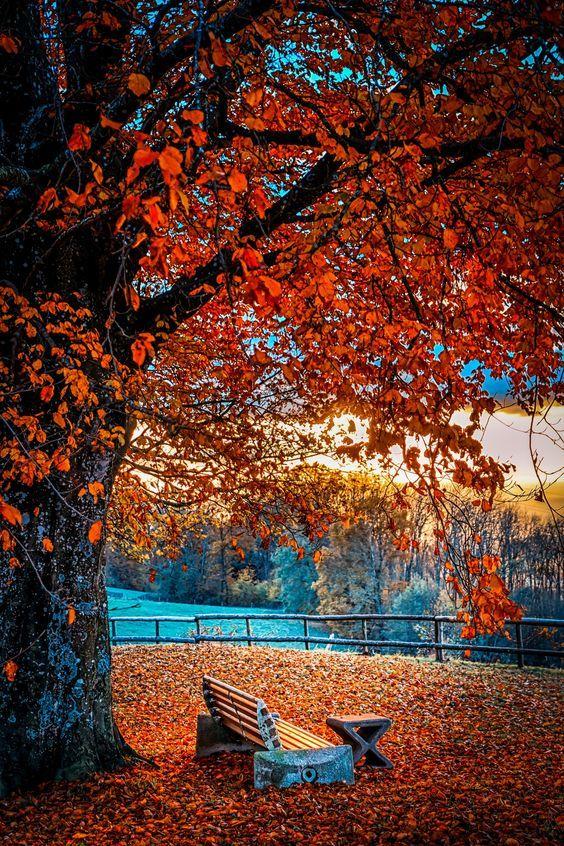 Beautiful Fall Day Meme