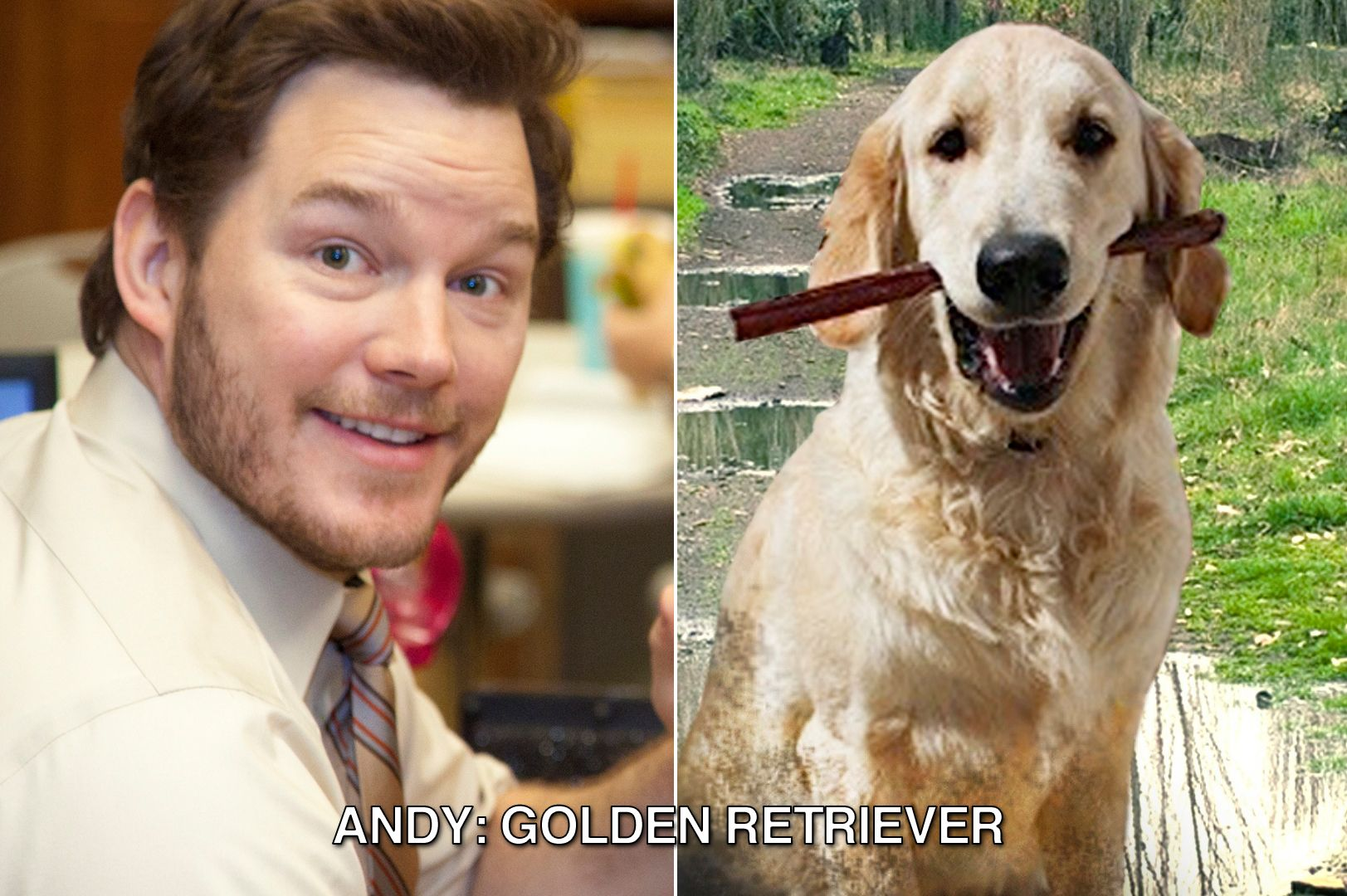 Andy Would Be A Golden Retriever Parksandrec Parks And