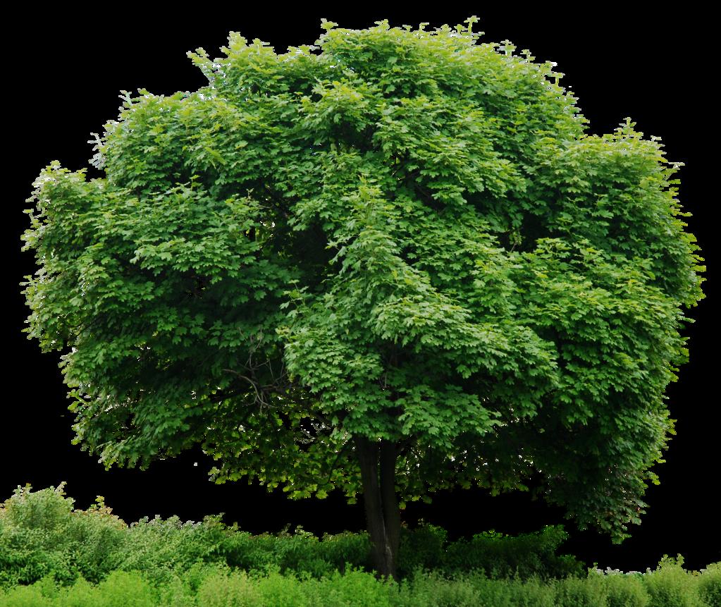 Alone Green Tree