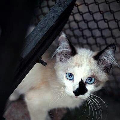 Li'l Blue Eyes
