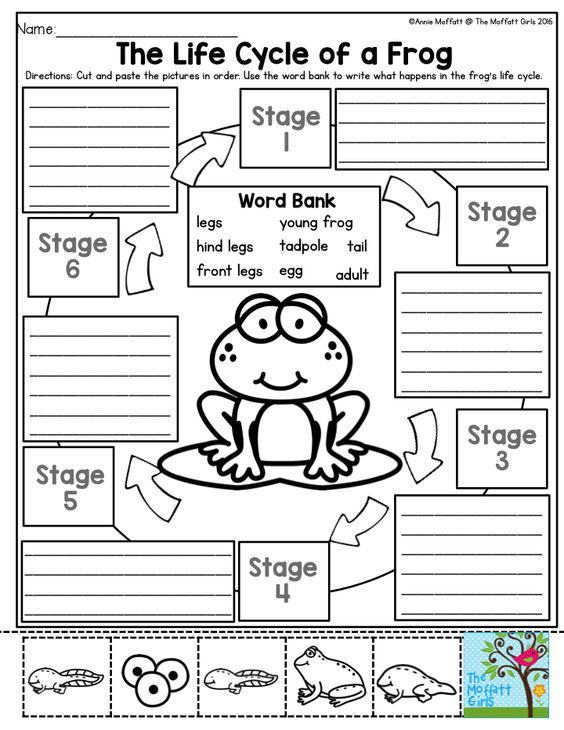 The Life Cycle of a Frog Kids love to learn about the – Metamorphosis Worksheet