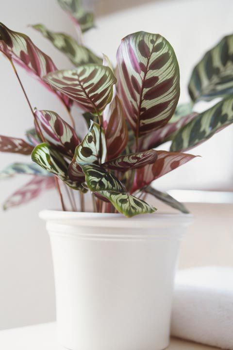 20 Indoor Plants for the Small-Space Gardener   Pinterest ...