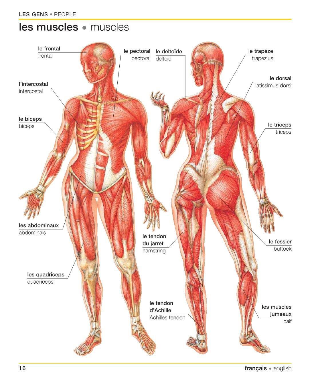Atemberaubend Grundlegende Menschliche Anatomie Und Physiologie Quiz ...