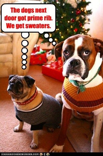 Noel Dogs Funny Dog Pictures Christmas Dog