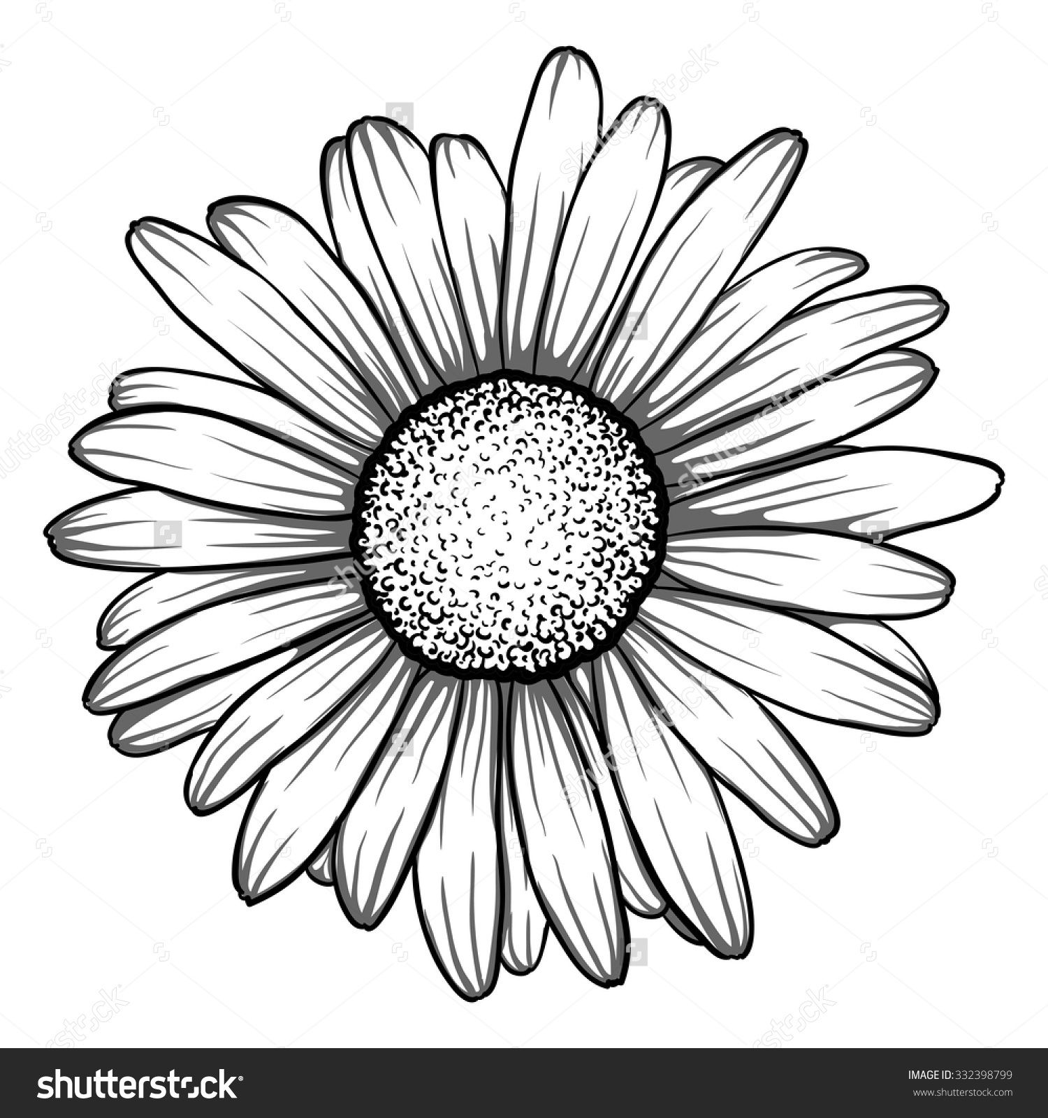 Daisy Tattoo Outline: Beautiful Monochrome, Black And White Daisy Flower