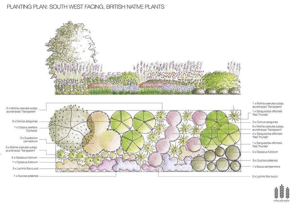 South West Facing British Native Plants FREE Planting Plan ...