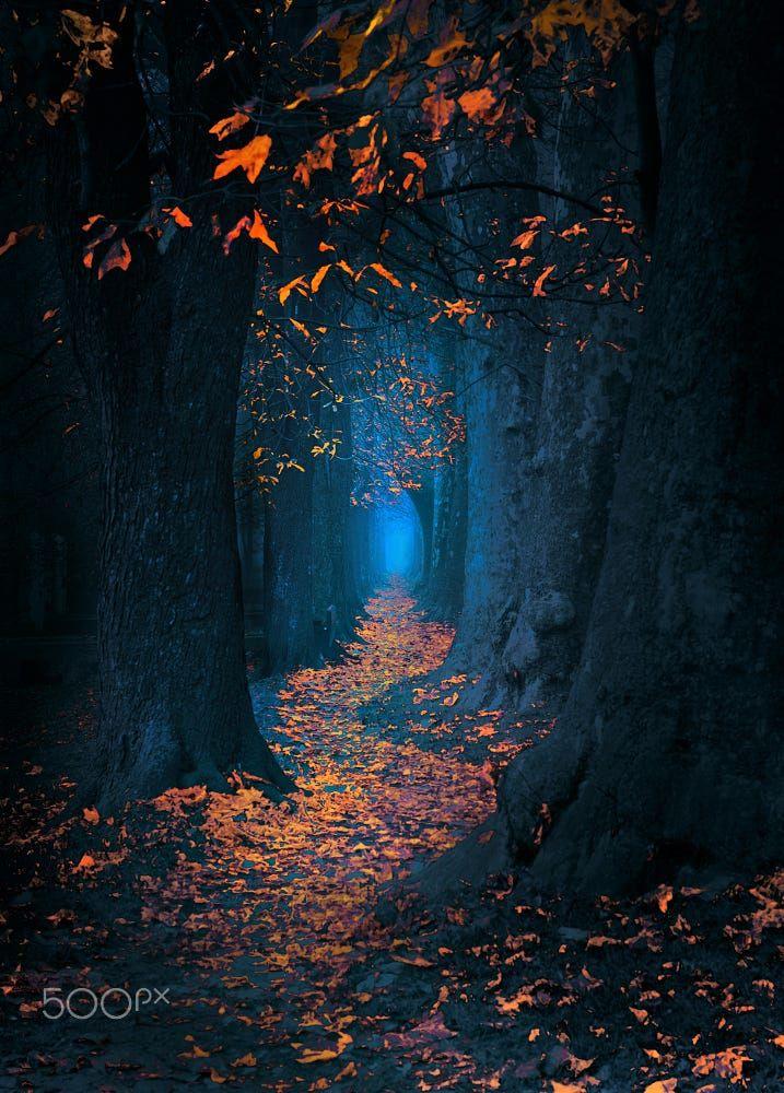 информацию фото волшебный лес фадеев