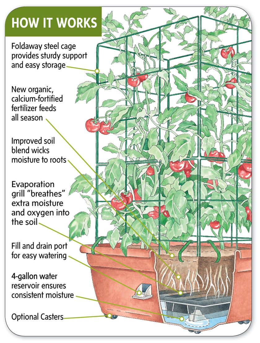 Growing Gardening How To Make A Self Watering Container