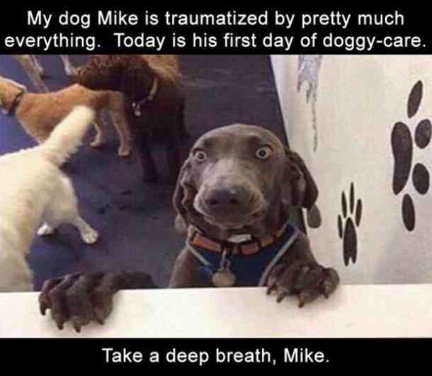 50 Hilarious And Relatable Dog Memes For National Dog Day Funny Animals Cute Funny Animals Funny Animal Pictures