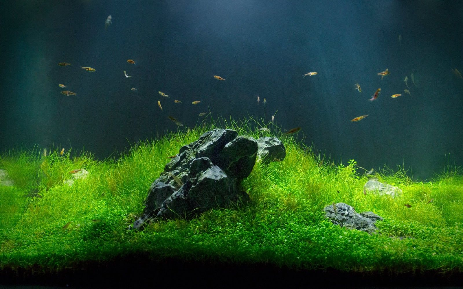 Fish tank vs aquarium - Feng Shui Minimal Freshwater Tank Beautiful Water Garden