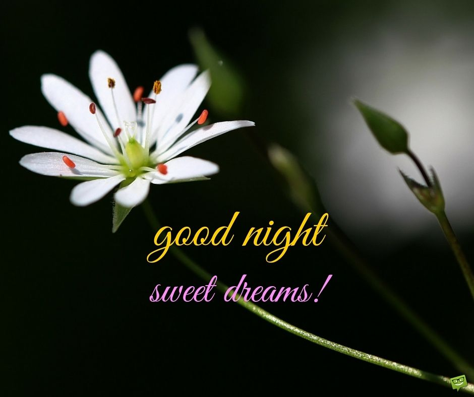 Good Night Images Download Good Night Flowers Good Night Images Hd Gud Night Images