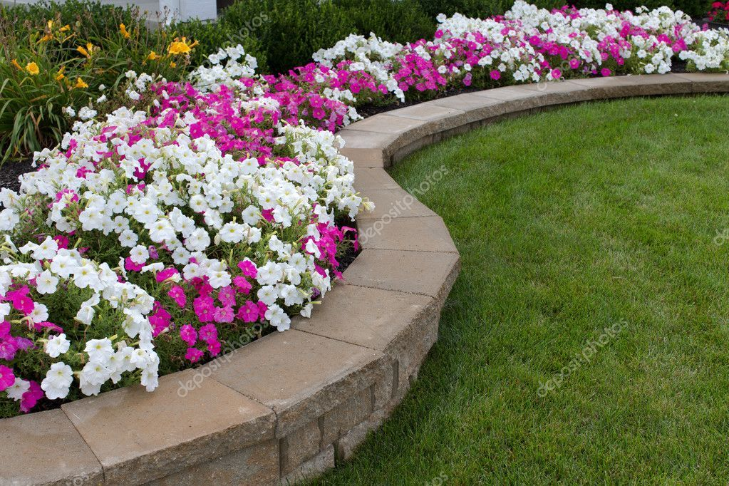Peink And White Petunias On The Flower Bed Along With The Grass Affiliate Backyard Retaining Walls Landscaping Retaining Walls Walkway Landscaping