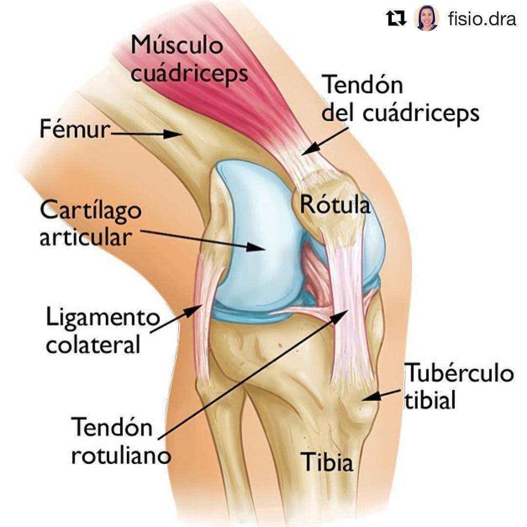 Fisioterapia - Physiotherapy (@fisioterapia.repost) su Instagram ...