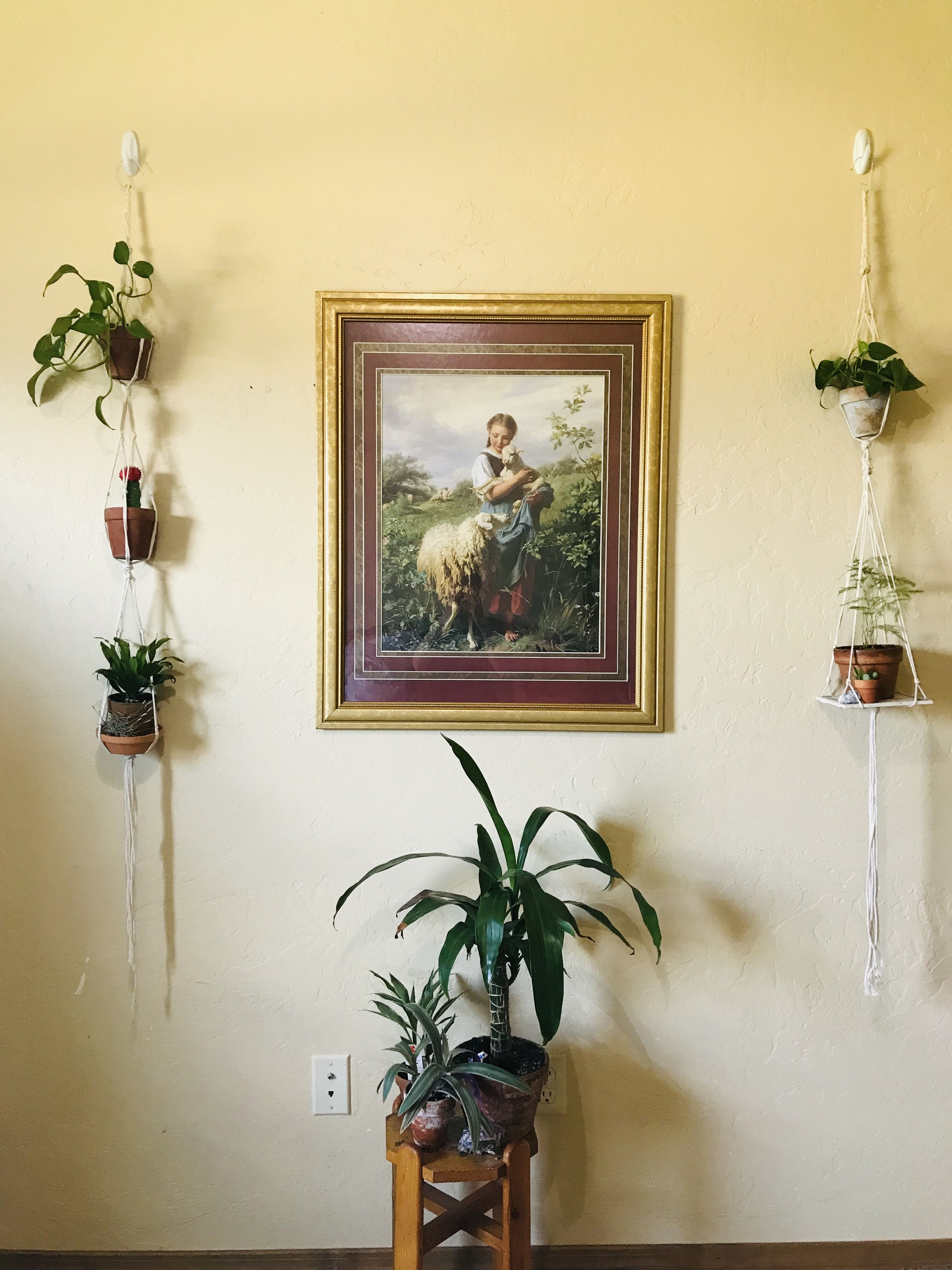 Hanging Plant Diy In 2020 Hanging Plants Diy Hanging Plants Stripped Decor