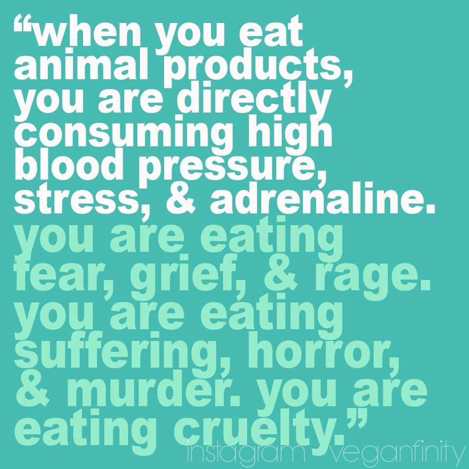 Vegan Quotes Verdade A Carne Vermelha Aumenta O Risco De Ataque Cardiaco E