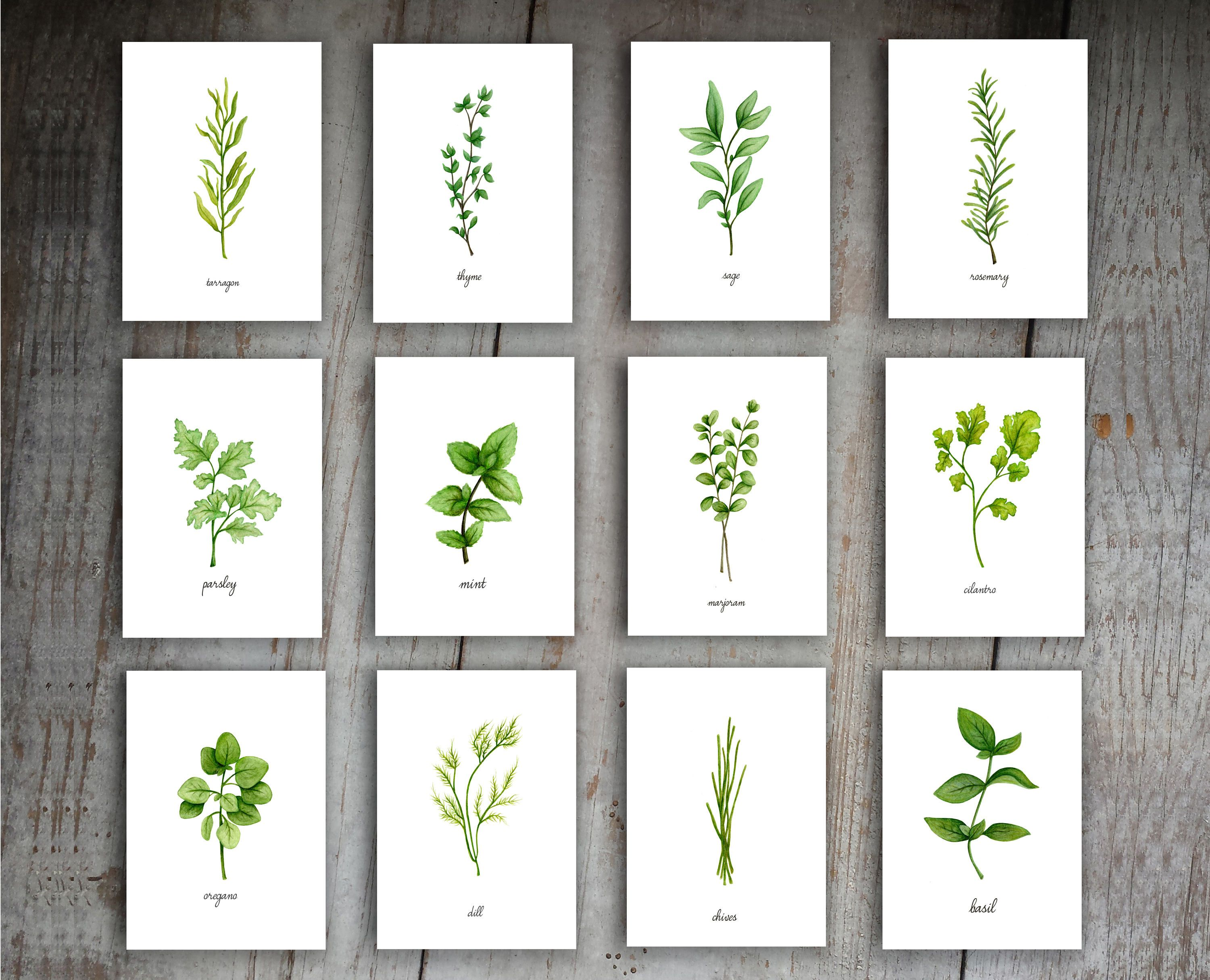 This Kitchen Herbs Watercolor Prints Set Of 12 Is The Perfect Wall
