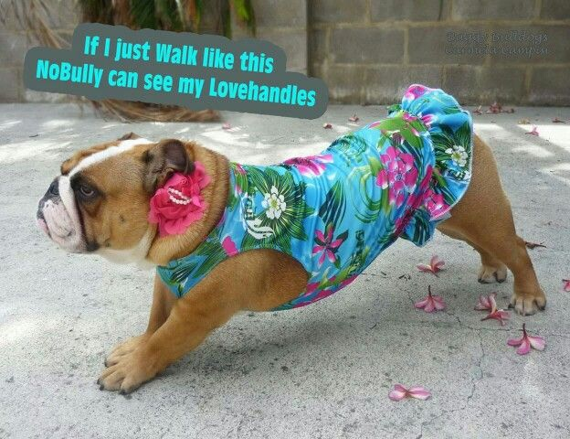 We Re Already For Our Trip To Hawaii Bulldog English Bulldog