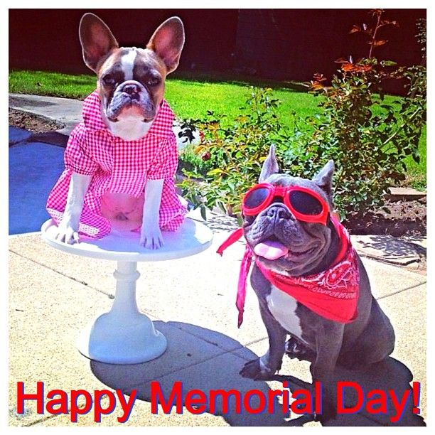 2 French Bulldogs ready for Memorial Day! Make sure to honor our fallen soldiers & to appreciate those currently serving! Congrats to @piggykittybb & thanks for posting!