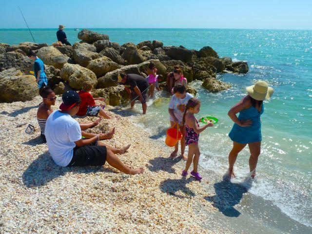 Collecting Sanibel Six Seashells | Sea shells, Sanibel ...