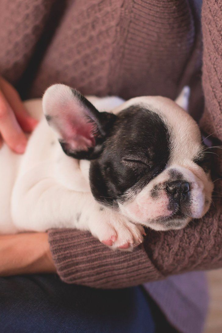 5 ways to make your life as a dog parent less stressful