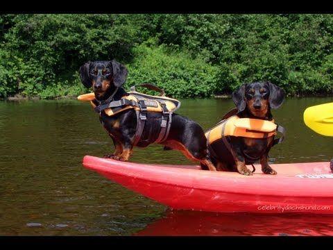 Kayaking With Dachshunds Gopro Doggy Cam Crusoe Oakley Go