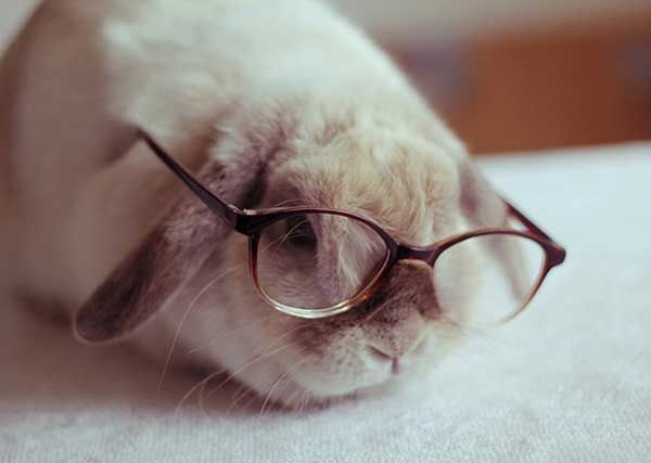 Alguns coelhos intelectuais - O Verso do Inverso