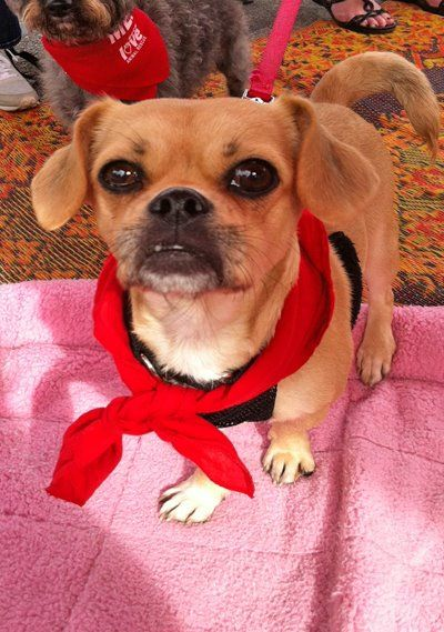Cutie Pie Kindle Is Looking For A Home In Los Angeles Look At