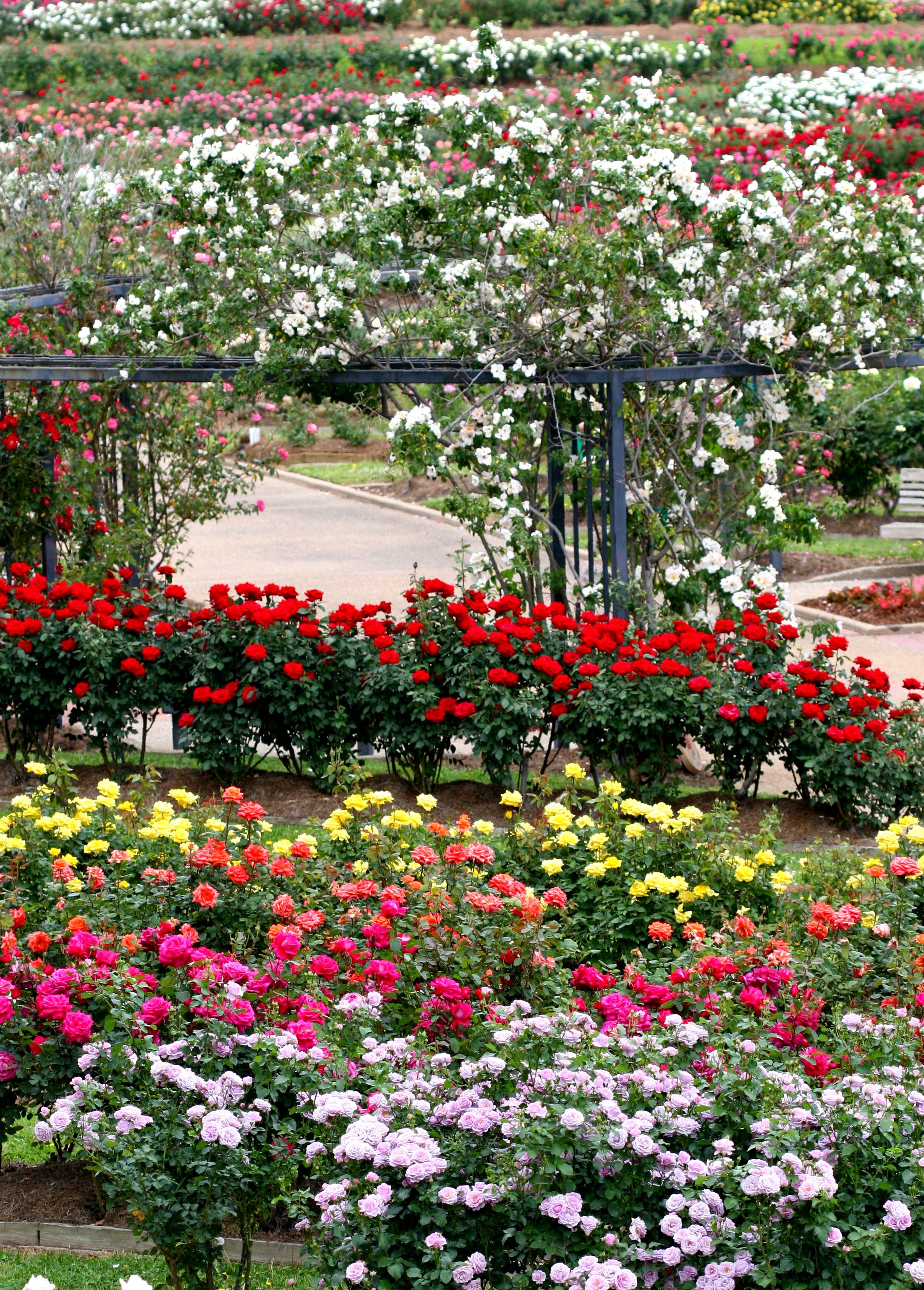 Pin By Amy Aldredge On Beautiful Flower Gardens Beautiful Gardens Gorgeous Gardens Dream Garden