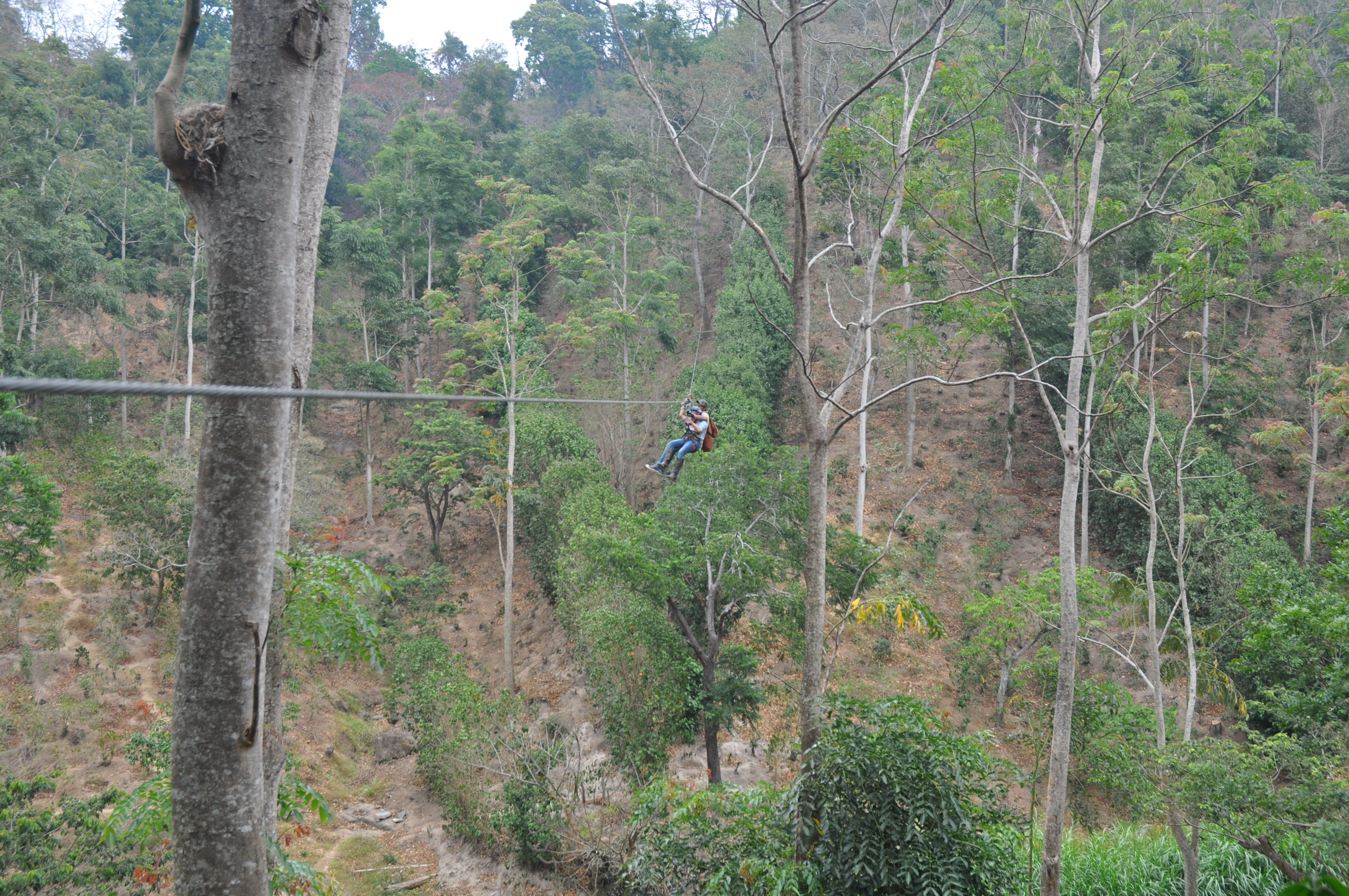 Canopy Adventure. Zip through the tropical forest canopy in Apaneca! & Canopy Adventure. Zip through the tropical forest canopy in ...
