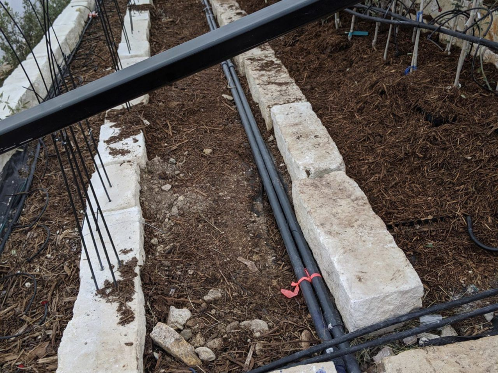 Hydronic Heating For Olive Trees In 2020 Hydronic Heating Systems Heating Systems Hydronic Heating