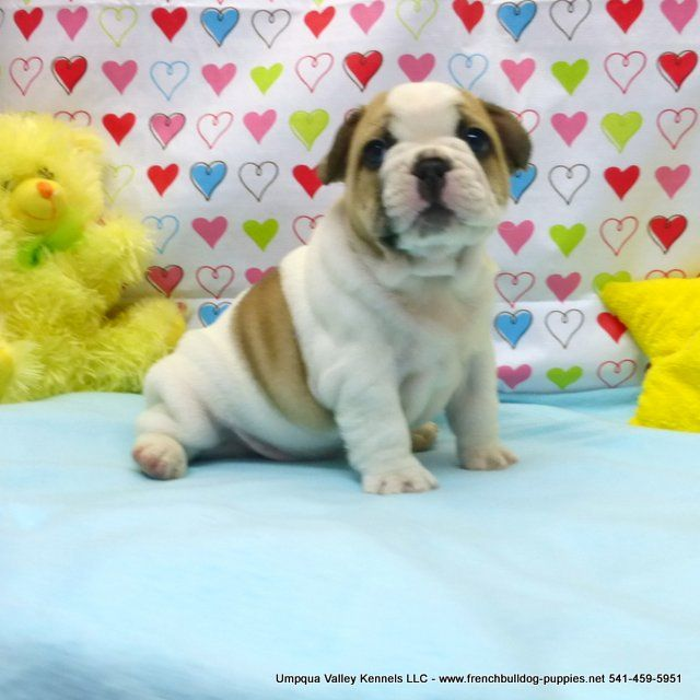 Viktoria Pups Akc French Bulldog Puppies For Sale Akc French