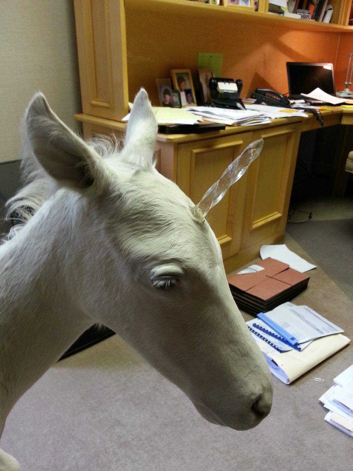 Pin by Skylar Zipp on Pegasus Pegasus unicorn, Taxidermy