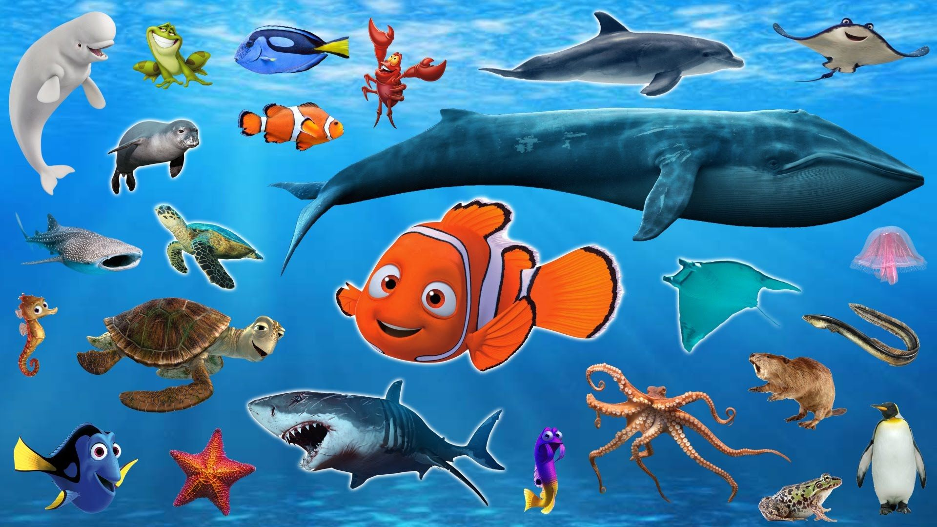 Learn Sea Animals + Water Animals Names and sounds