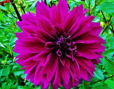20 fotos de flores para ver, disfrutar y compartir en Facebook | Banco de Imagenes (shared via SlingPic)