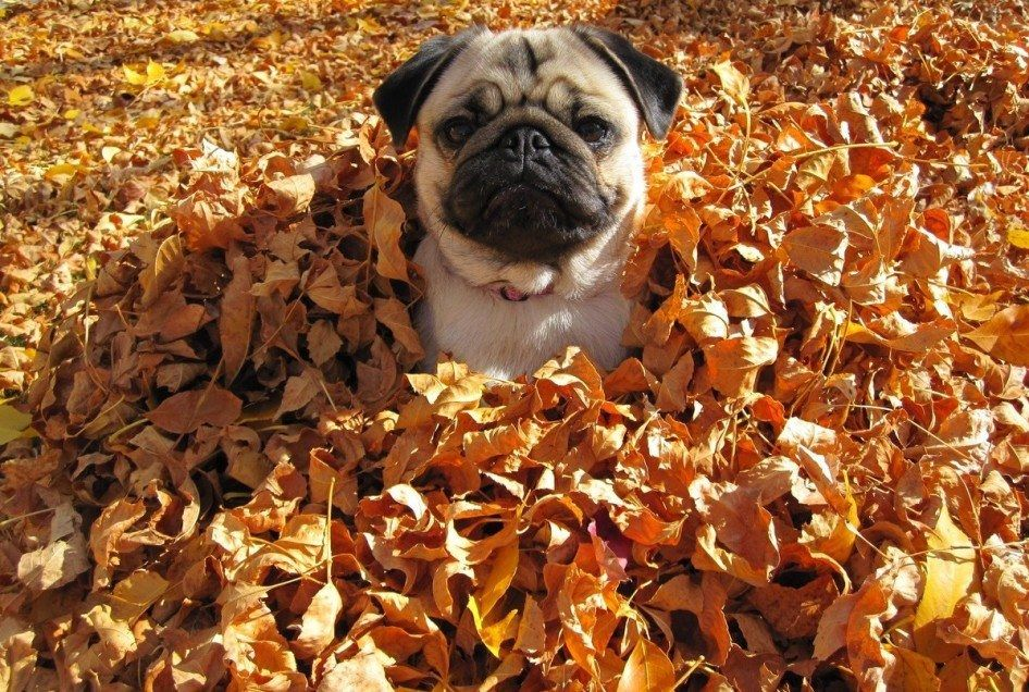 20 Amazingly Cute Animals Enjoying The Magical Season Of Autumn
