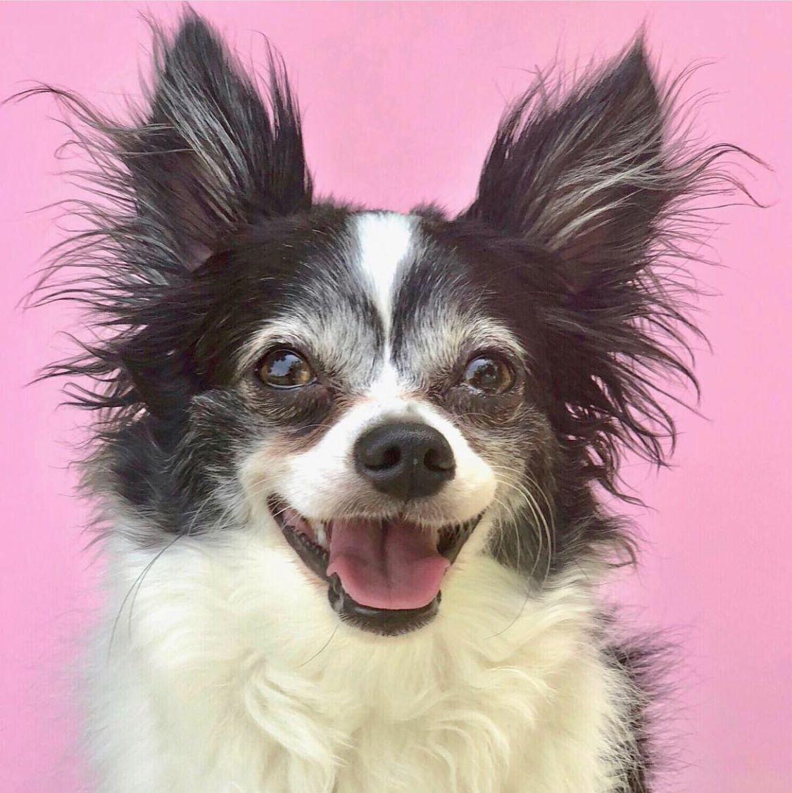 R O M A N T I C V I O L E T R O S E Thepuppiesdubai Fugucherie Happy Dogs Adoption Photos Dog Photos
