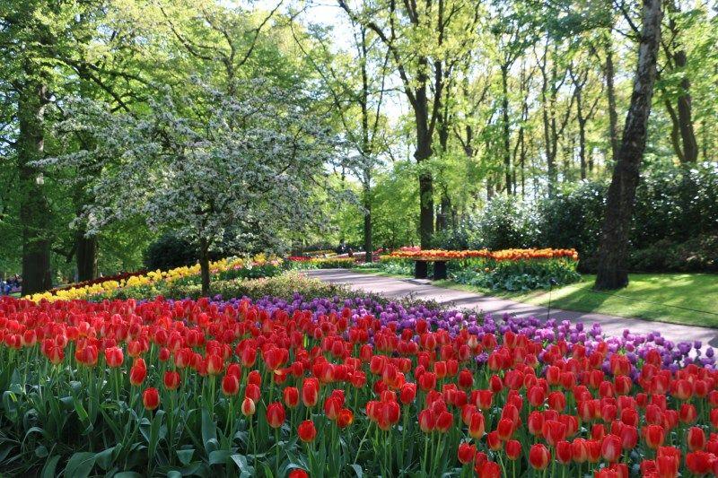 Amsterdam Tulip Season 2020 Amsterdam Tulips Tulip Season