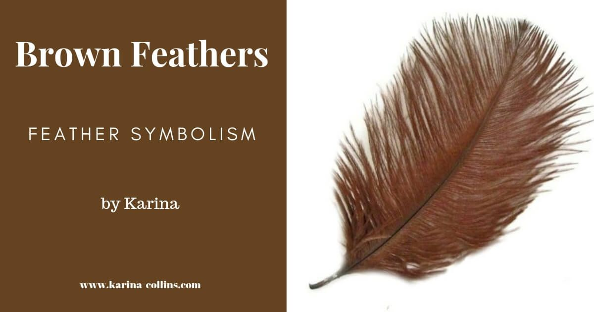 Brown Feather Meaning I Symbolism Your Cosmic Message In 2020