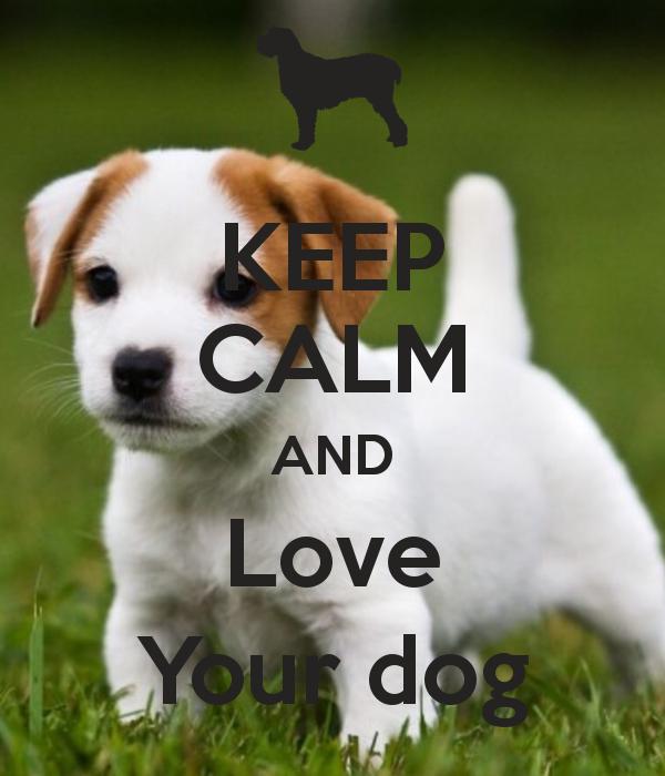 keep calm and love your dog. Black Bedroom Furniture Sets. Home Design Ideas