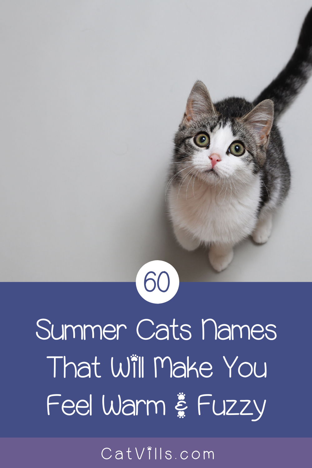 60 Summer Cat Names That Will Make You Feel Warm Fuzzy In 2020 Cat Names Cats Funny Cat Memes
