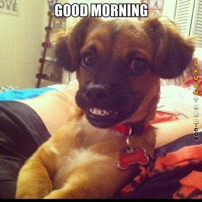 Funny Dog Good Morning Memes Funny Animal Memes Funny Pictures Funny Dogs