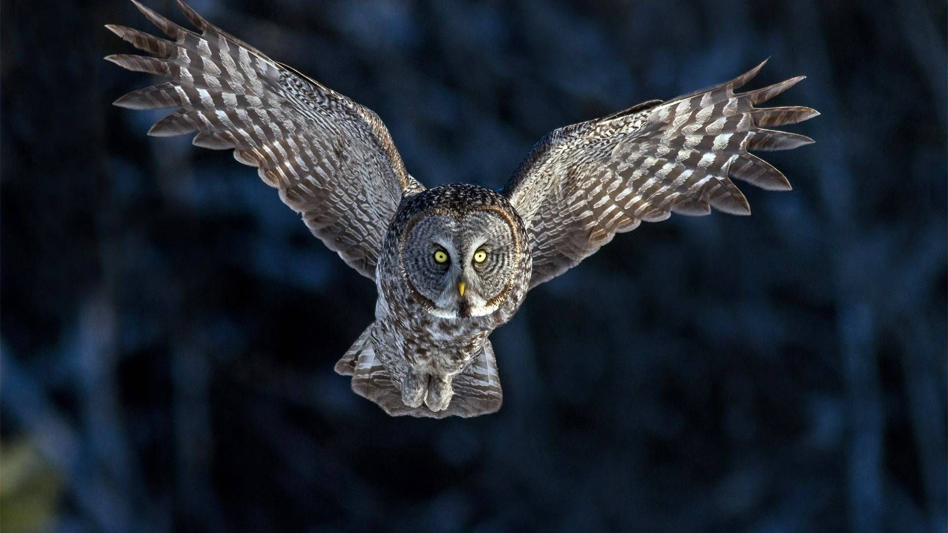 Pin By Rich Hall On Reference Great Grey Owl Owl