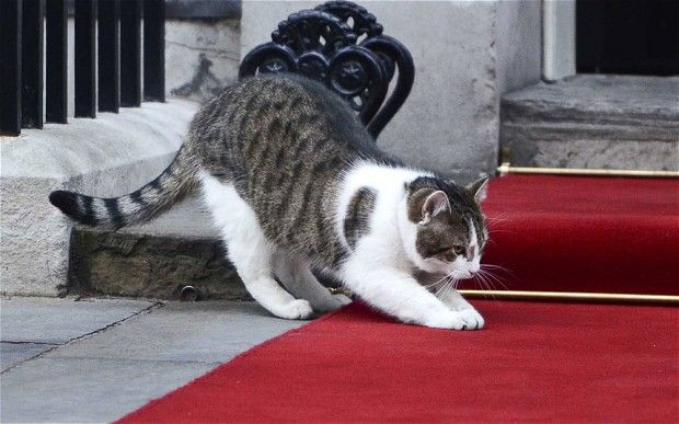 Larry was appointed to the post of Chief Mouser to the Cabinet Office nearly two years ago, after being adopted from the mean streets of south London via Battersea Dogs and Cats Home.
