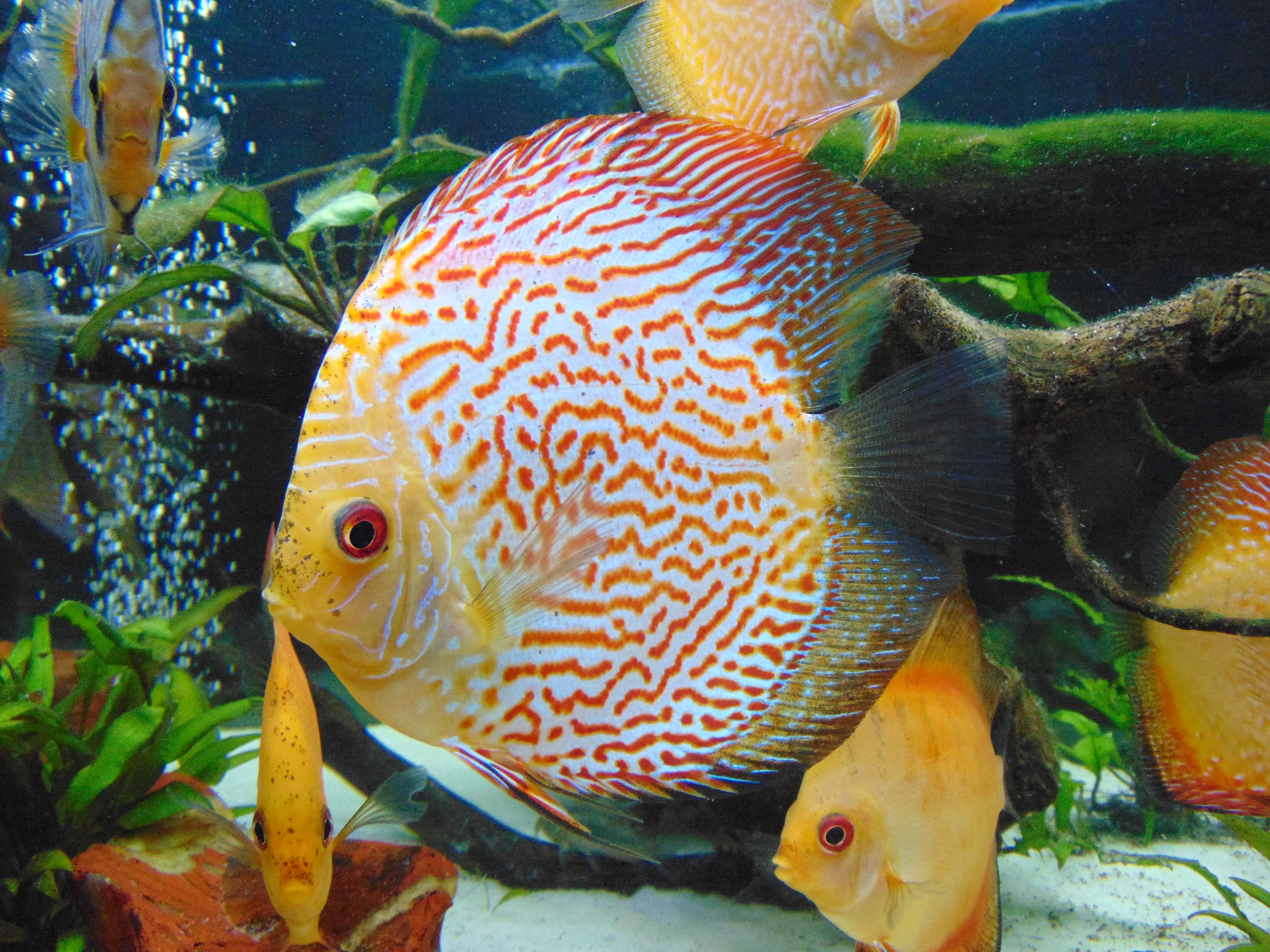 Pin On Discus Stendker By Omniapet