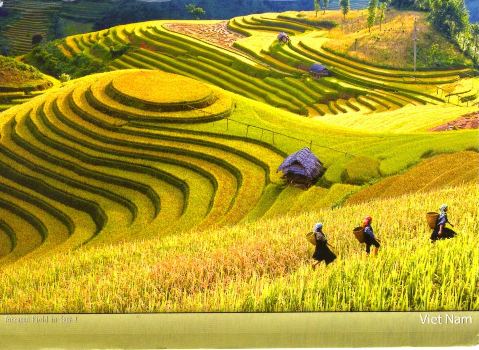 Ha noi Vietnam: http://www.hivietnam.vn/ha-noi/ Tạp chí dành riêng cho phái mạnh: http://him.vn/ Mua tên miền rẻ: http://inet.vn/dang-ky-ten-mien.html