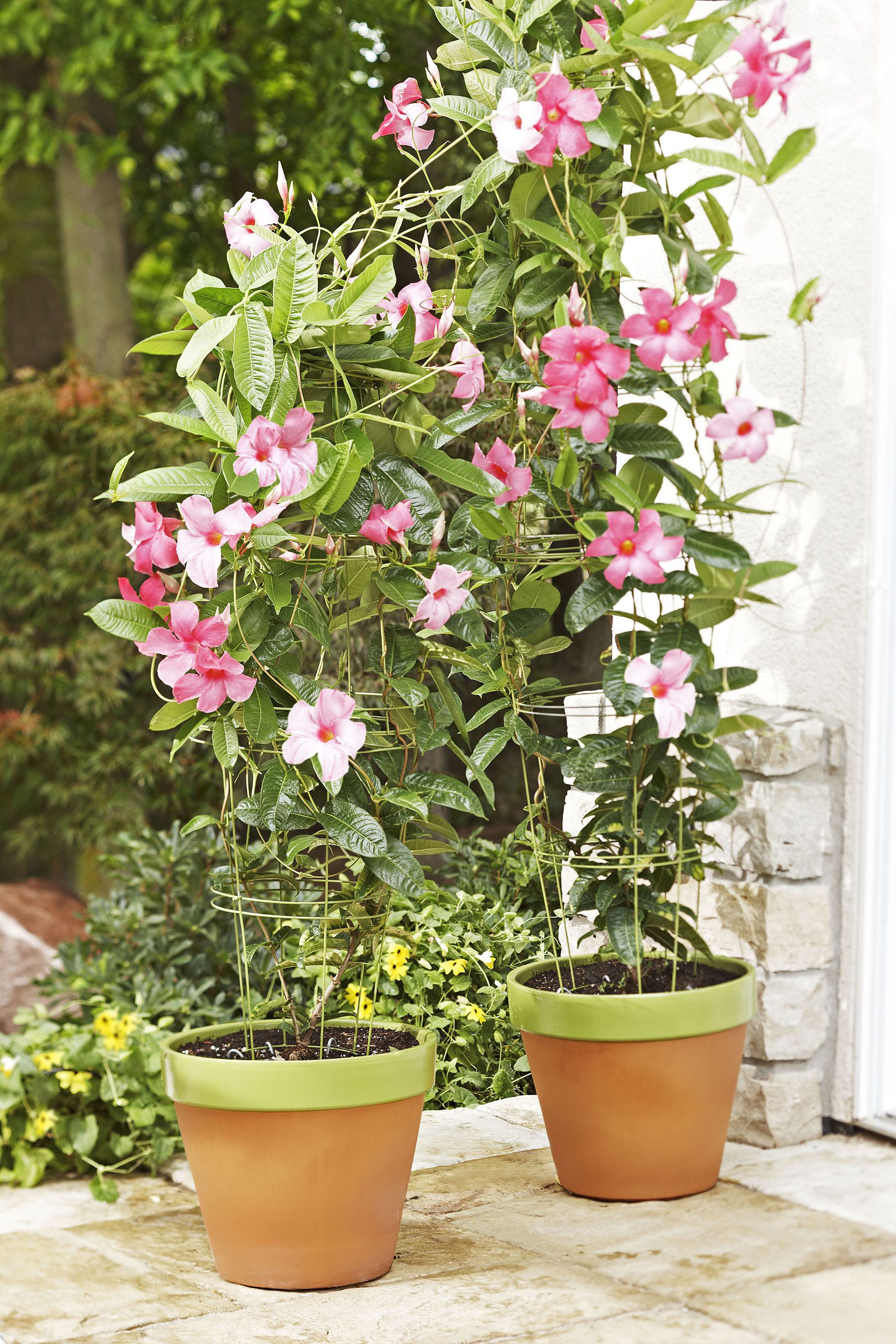 Create a flowerpot trellis using tomato cages and cable