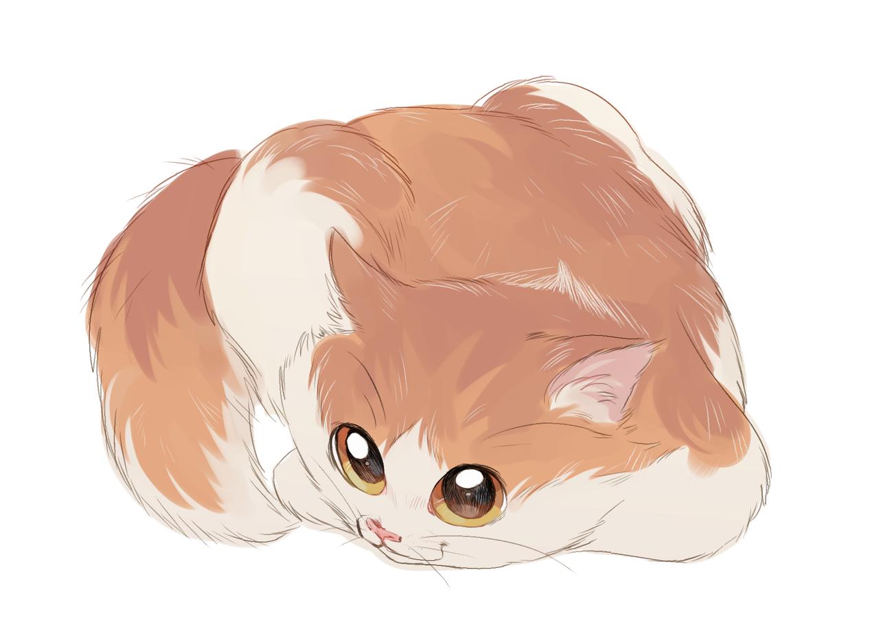 e71f5e714778 кот (прикольные картинки с кошками) / смешные картинки и другие приколы:  комиксы,