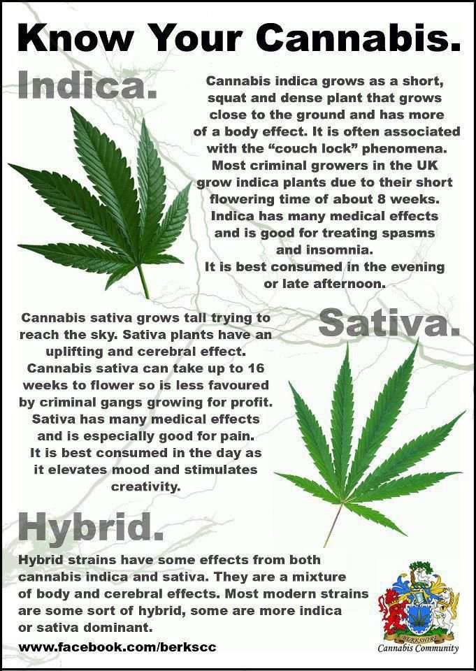 ...I like Sativa for day and Indica for night...