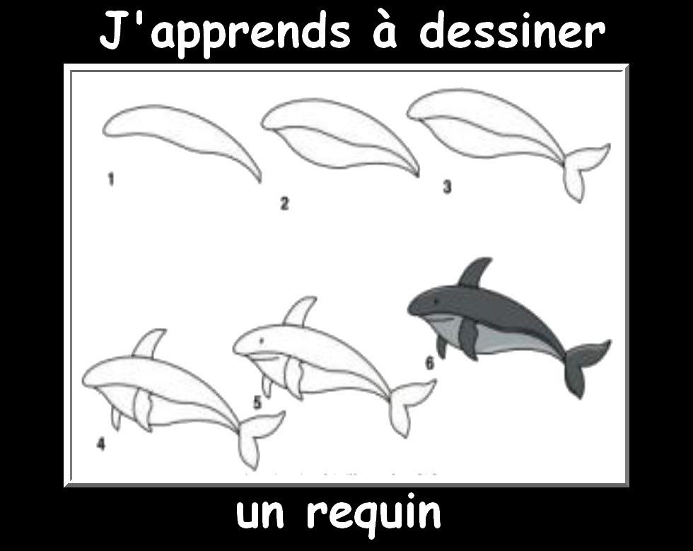 Des fiches j 39 apprends dessiner les animaux mer apprendre dessiner petit dessin et - Requin en dessin ...