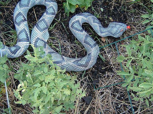 Up Snake To Keep Birds Away